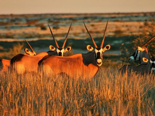 Fly Drive Namibie Highlights te Damaraland